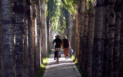 RECOMENDACIONES PARA ADULTOS EN SOBREPESO (GRADOS I Y II)